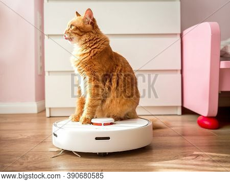Funny Ginger Cat Looks Up, Cat Licks Its Lips While Ride On Robotic Vacuum Cleaner From Kitchen. Mew