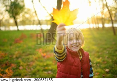 Little Boy Having Fun During Stroll In Forest At Sunny Autumn Day. Playful Child Shows Gold Maple Le