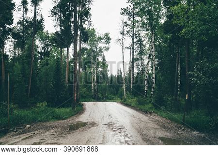 Dark, Spooky Scene And Mood On A Rainy Overcast Day On Moose-wilson Road, Unpaved With Potholes In G