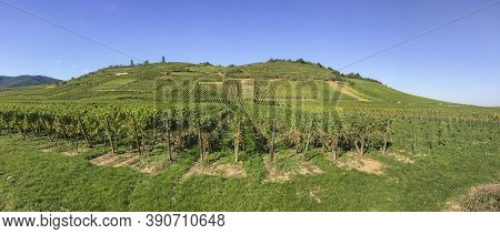 Riquewihr, France - September 29, 2015: Among The Idyllic Vineyards In Alsace, France