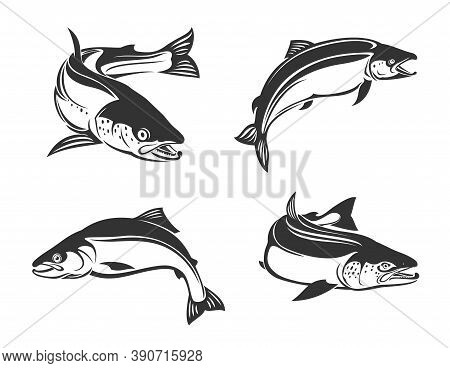 Salmon Fish Vector Icons, Sea Saltwater Humpback Or Freshwater River Pink Salmon Or Trout Fish Speci