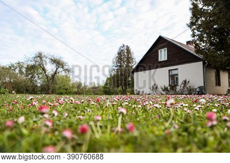 Small Lawn Flowers Blooming In Front Of Old Countryside Home On A Warm Spring Day. Photo Taken In Eu