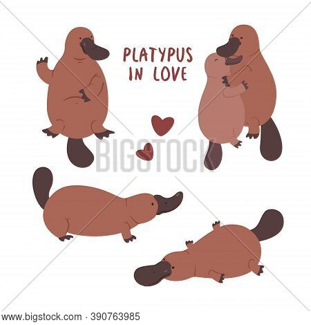 Set With Pair Of Platypuses In Love. Vector Flat Illustration Animal On White Background