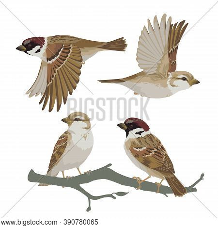 Set Of Realistic Sparrows Flying And Sitting On Branch. Vector Illustration Of Little Birds Sparrows