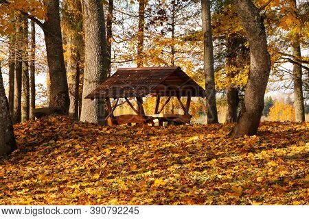 Old Arbor In A Beautiful Autumn Forest. Heavenly Background.