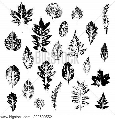 Vector Leaves Set, Isolated On White Background. Beautiful Prints Of Leaves.