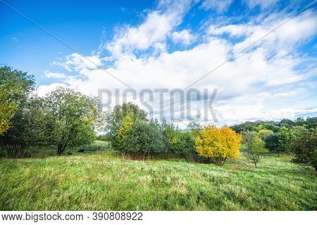 Green Landscape With A Yellow Tree With Autumn Colors On A Bright Day With A Blue Sky