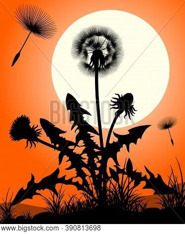 Vector Silhouette Of A Dandelion. Dandelion Silhouette Against Sunset With Seeds Blowing In The Wind