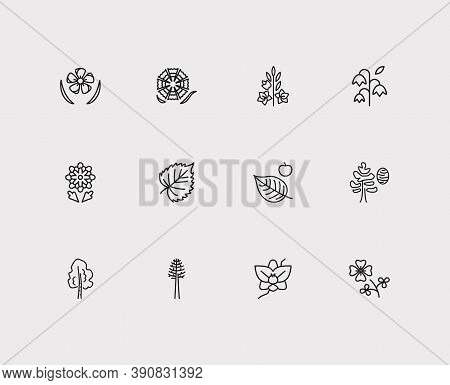 Flora Icons Set. Orchids And Flora Icons With Dianthus, Chrysanthemum And Bluebell. Set Of Spruce Fo