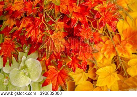 Background With Group Autumn Orange Leaves. Outdoor. Autumn Concep
