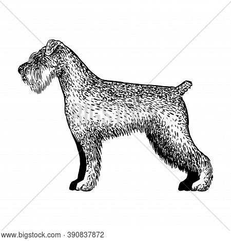 Realistic Schnauzer Dog. Dog Breed - Vector Illustration