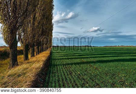 Green Field Of Winter Crops On A Background Of Blue Sky. Sunny Autumn Day. Blue Sky With Fluffy And
