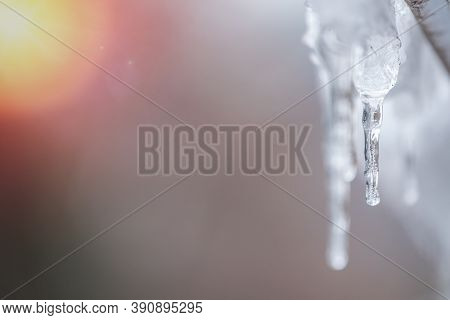 Transparent Icicle On A Gray Background With Copy Space. A Icicles Melting Down. Spring Weather.