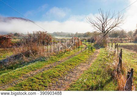 Rural Landscape On A Foggy Sunrise. Beautiful Countryside Scenery In Autumn Season. Leafless Tree Al