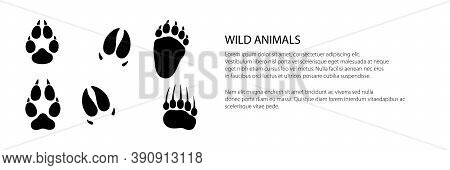 Banner Of Track Of Forest Animals, Traces Of A Bear And A Boar And A Wolf, Vector Illustration