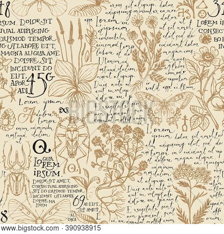 Seamless Pattern With Medicinal Herbs, Insects And Handwritten Text Lorem Ipsum. Vector Hand-drawn H