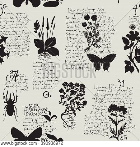 Seamless Pattern With Handwritten Text Lorem Ipsum And Black Silhouettes Of Medicinal Herbs And Inse