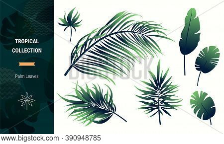 Palm Fronds, Leaves Vector Collection. Tropical Greenery, Jungle Plant, Green Foliage Clipart Isolat