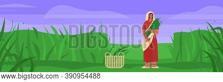 Indian Female Farmer Works In Field. Woman Dressed In Sari Is Holding Sickle And Sheaf Of Rice In Ha