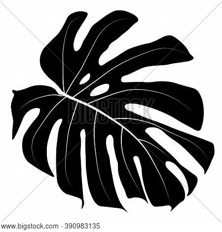 Vector Stock Illustration Of Tropical Leave. Monstera Leave. Watercolor Greenery Plant. Template For
