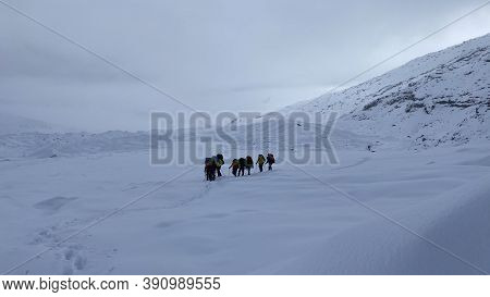 A Group Of Climbers With Large Backpacks And Trekking Poles Are Walking Through The Snowy Expanses O