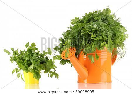 Orange watering can and yellw pail with parsley and dill isolated on white