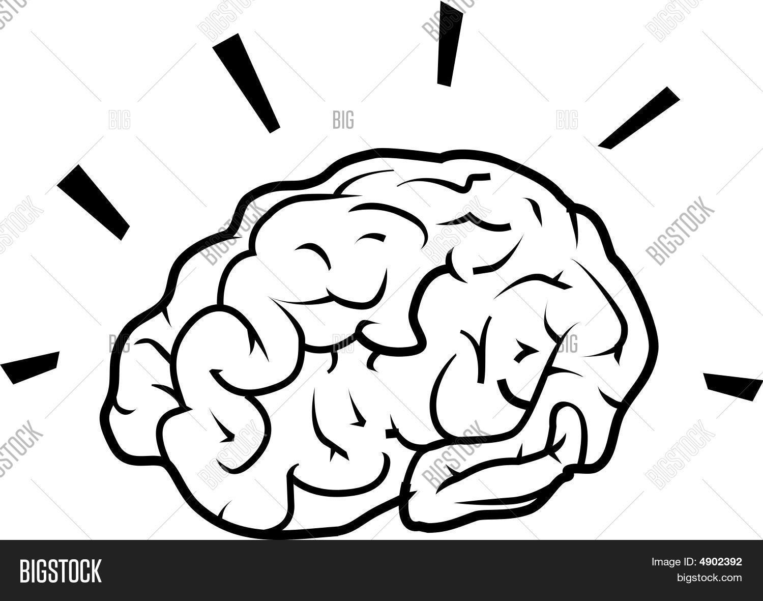 Line Drawing Brain : Brain line drawing vector photo bigstock