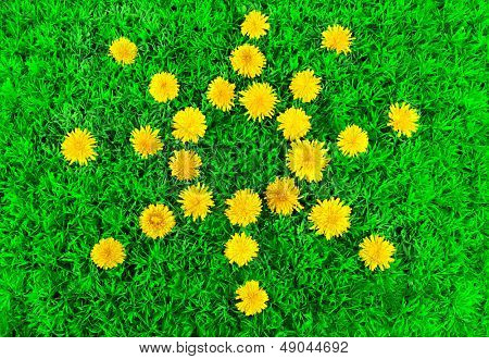 Sun of dandelions on grass close-up