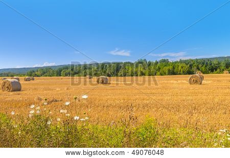 Farm Field With Hay Bales