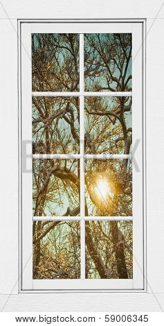 Golden Winter Forest Branches White Window View