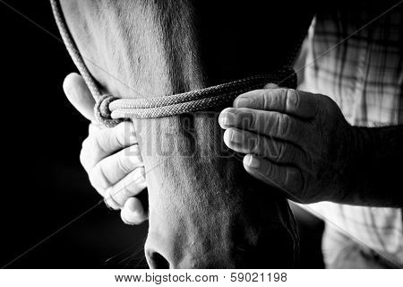 weathered farmers hands gently holding horse head