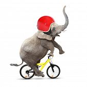 Funny elephant with protective helmet riding a bike. Safety and insurance concept. poster