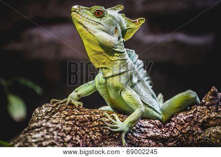 chameleon, scaly lizard skin resting in the sun