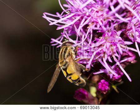 Wasp On Side Of Pink Flower