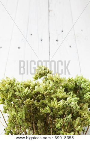 Bunch Of Dry Oregano With Copy Space