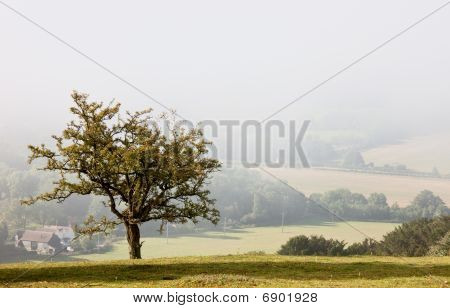 Lone Tree Overlooking A Misty Valley In Autumn