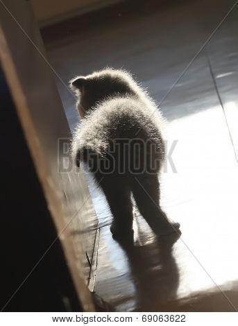 Silhouette Of A Little Kitten