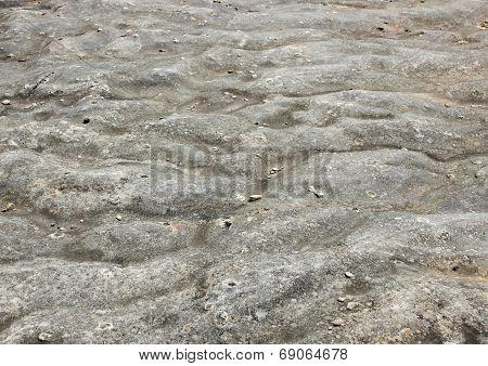 Petrified Ocean Bottom At Island Of Bornholm Denmark