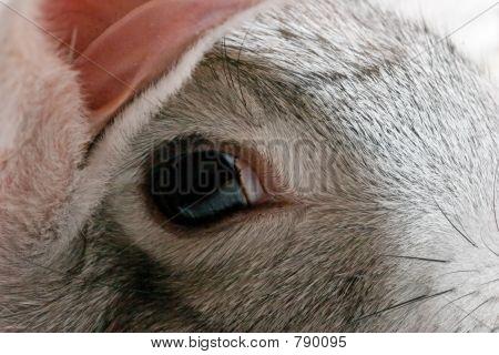 Close up grey rabbit head