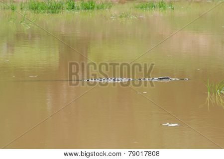 Crocodile Lurching