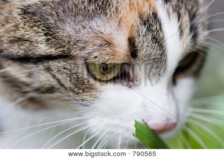 Cat tasting grass close up portret