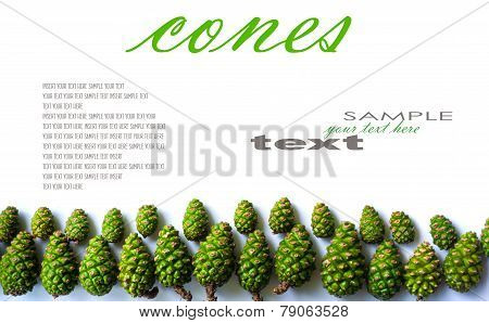 Green framework with green fir cones with place for your text. Isolated on white background