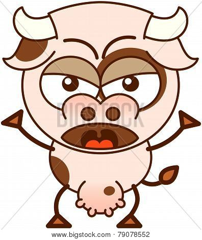 Cute cow in a very angry mood
