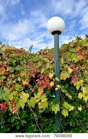 Street lamp in changing leaves