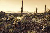 Beautiful desert scene at dusk in Phoenix, Arizona,USA poster