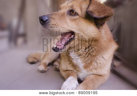 Redhead undersized the dog gleefully opened her maw