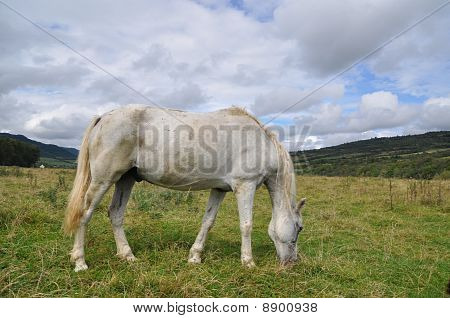 A horse on a summer pasture in a rural landscape under clouds. poster