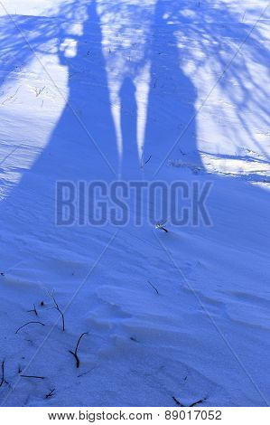Funny Shadows On The Snow