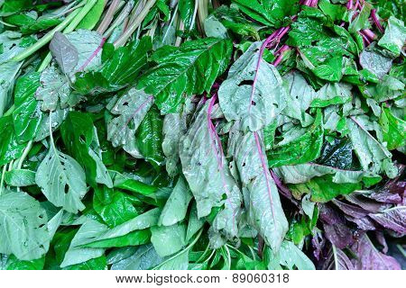 Basella Alba Malabar Spinach isolated on white background poster