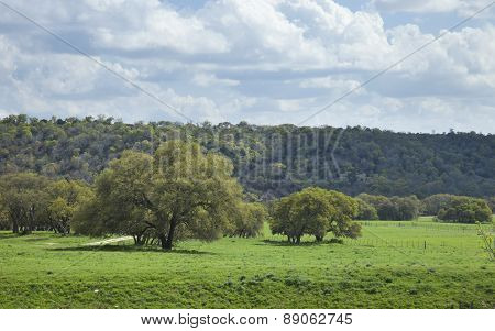 A ranch pasture with trees in the Texas Hill Country on a sunny afternoon poster